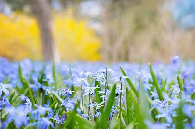 spring-flowers-741965_1920.jpg